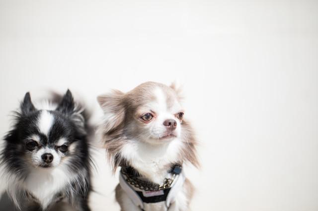 愛犬と学ぶしつけの教科書